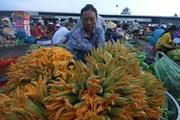 [Photo] Những sản vật phong phú trong mùa lũ ở tỉnh Hậu Giang