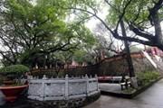 Thăm đền Cao An Phụ - điểm đến tâm linh, lịch sử hấp dẫn