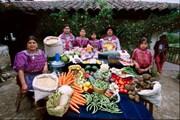 Vòng quanh thế giới khám phá món ăn ưa thích trong các gia đình