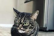 Gặp Kitzia, chú mèo cau có nổi tiếng nhất cộng đồng mạng