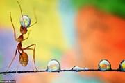 Bộ ảnh tuyệt đẹp về chú kiến nhỏ được chụp bằng Galaxy Note 8