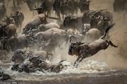 Những bức ảnh động vật hoang dã tuyệt đẹp trong cuộc thi tại Anh