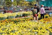 Hình ảnh hoa Tết khoe sắc rực rỡ tại Kiên Giang, Hậu Giang