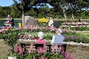 [Photo] Festival hoa Đà Lạt - Sự kết tinh kỳ diệu từ đất lành