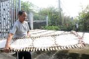 [Photo] Vĩnh Long: Giữ nghề bánh tráng trăm tuổi ở Cù lao Mây