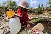 Hình ảnh người dân Ninh Thuận oằn mình chống hạn