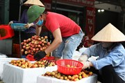 Bất chấp dịch bệnh, vải sớm Bắc Giang vẫn được tiêu thụ thuận lợi