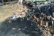 Cận cảnh dòng suối 'ngậm dầu' dẫn vào nhà máy nước Sông Đà
