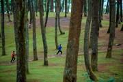 Lạc bước ở rừng thông Yên Minh - Thảo nguyên xanh giữa cao nguyên đá