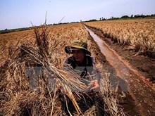Vài ngày tới, mặn có thể xâm nhập sâu tại Đồng bằng sông Cửu Long