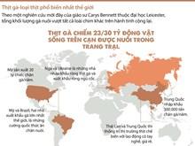 [Infographics] Thịt gà - loại thịt phổ biến nhất trên thế giới