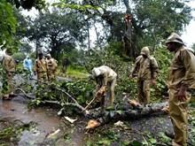 Gần 60 người thiệt mạng khi cơn bão Titli quét qua miền Đông Ấn Độ