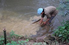 Tạo sinh kế bền vững cho dân khu mỏ vàng Ma Nu
