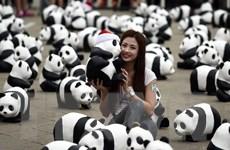 Người Malaysia thỏa sức chụp hình cùng 1.600 chú gấu trúc dễ thương