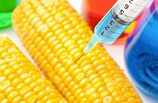 Mỹ: Làn sóng vận động thắt chặt quy định về thực phẩm GMO gia tăng