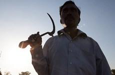 Cuộc sống tuyệt vọng khiến nông dân Ấn Độ tự sát hàng loạt