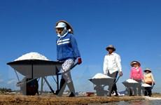 Phú Yên: Muối được mùa mất giá, đời sống diêm dân khó khăn