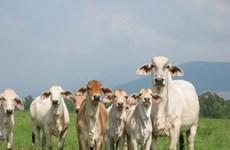 Brazil tăng cường xuất khẩu thịt bò sang thị trường Trung Quốc