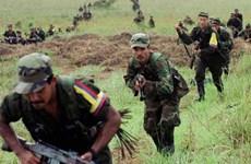 Colombia: FARC tuyên bố ngừng bắn đơn phương 1 tháng
