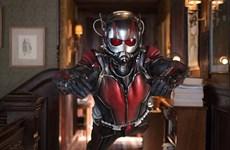 """Siêu anh hùng tí hon """"Ant Man"""" tiếp tục dẫn đầu phòng vé Bắc Mỹ"""