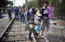 Italy bắt một loạt chủ rạp xiếc vì tiếp tay người nhập cư trái phép