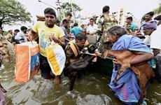 Mưa lớn liên tục hai tuần gây ngập lụt nghiêm trọng ở Ấn Độ