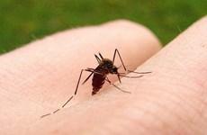 Brazil cho phép sử dụng vắcxin phòng virus sốt xuất huyết