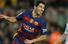 Luis Suarez đã may mắn khi không phải gia nhập Arsenal