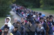 Slovenia điều quân đội hỗ trợ kiểm soát người di cư tại biên giới