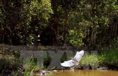 Phát hiện nhiều loài động vật quý hiếm ở vườn quốc gia U Minh Hạ