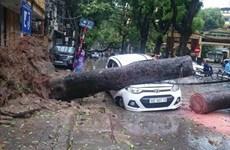 Hà Nội lý giải nguyên nhân cây gẫy đổ trong cơn bão số 1