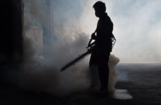 Thái Lan nâng cảnh báo ứng phó toàn quốc về dịch virus Zika