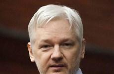 Hoãn phiên thẩm vấn nhà sáng lập WikiLeaks Julian Assange