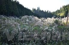 Tottori - thành phố tái định cư với môi trường sống tốt nhất Nhật Bản