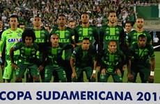 CONMEBOL dừng toàn bộ các trận đấu sau vụ máy bay rơi