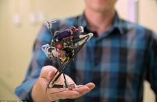 Robot nhảy cao hứa hẹn sẽ trở thành công cụ cứu hộ đắc lực