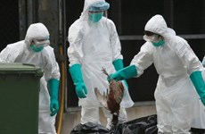 Trung Quốc phát hiện thêm 2 ca nhiễm H7N9, 1 người nguy kịch