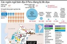 [Infographics] Các ngôn ngữ bản địa ở Peru đang bị đe dọa