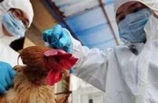 Trung Quốc phát hiện thêm các trường hợp lây nhiễm mới H7N9