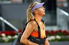 """Maria Sharapova bại trận trước Bouchard ở """"cuộc chiến sắc đẹp"""""""