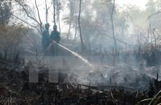 Thái Nguyên: Khoảng 13ha rừng thuộc Vườn Quốc gia Tam Đảo bị cháy