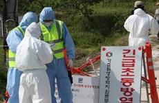 Hàn Quốc xác nhận trường hợp nhiễm cúm gia cầm ở thành phố Busan