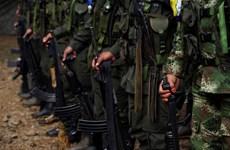 Colombia: Liên hợp quốc xác nhận FARC đã giao nộp 30% vũ khí
