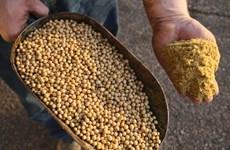 Mexico giảm mạnh nhập khẩu nhiều mặt hàng nông sản của Mỹ