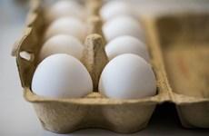 Hàn Quốc phát hiện một số sản phẩm trứng nhiễm chất độc Fipronil