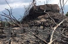 Hàng chục ha rừng tự nhiên ở tỉnh Bình Định tiếp tục bị tàn phá