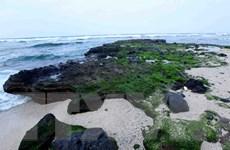 Quảng Nam: Giữ bãi biển và rừng phòng hộ trong phát triển đô thị