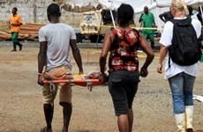 Ít nhất 12 người đã tử vong do dịch tả bùng phát tại Nigeria