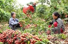 GDP ngành nông nghiệp 6 tháng tăng cao nhất trong 10 năm qua
