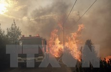 Liên minh châu Âu triển khai các hỗ trợ giúp chống cháy rừng